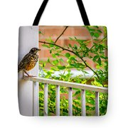 Baby Robin - Such A Big World Tote Bag
