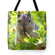 Baby Rock Squirrel  Tote Bag