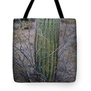Baby Saguaro Cactus Tote Bag