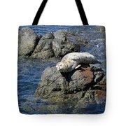 Baby Sea Lion On Rock At San Juan Island Tote Bag