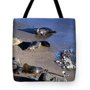 Baby Seals Tote Bag