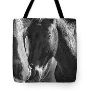 Bachelor Stallions - Pryor Mustangs - Bw Tote Bag