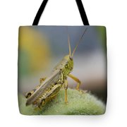 Back Side View Of Green Grasshopper....   # Tote Bag