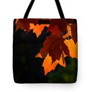 Backlit Autumn Maple Leaves Tote Bag