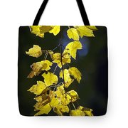 Backlit Leaves Of Autumn Tote Bag