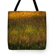 Backlit Meadow Grasses Tote Bag