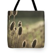 Backlit Teasel Tote Bag