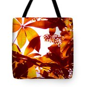 Backlit Tree Leaves 2 Tote Bag