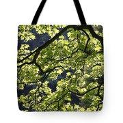 Backlit Tree Tote Bag