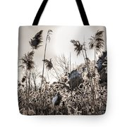 Backlit Winter Reeds Tote Bag