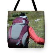Backpacker Watches Dall Sheep Tote Bag