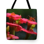 Backyard Beauties Tote Bag