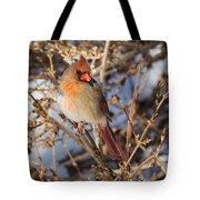 Backyard Birds Female Nothern Cardinal Tote Bag