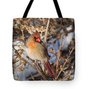 Backyard Birds Female Nothern Cardinal Square Tote Bag