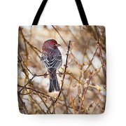Backyard Birds Male House Finch Tote Bag