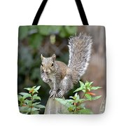Backyard Burglar Tote Bag