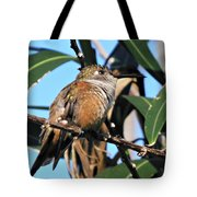 Bahama Woodstar Hummingbird Tote Bag