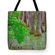 Bald Cypress And Red Buckeye Tree At Mile 122 Of Natchez Trace Parkway-mississippi Tote Bag