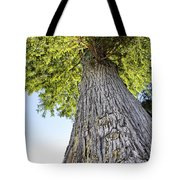 Bald Cypress In Morning Light Tote Bag