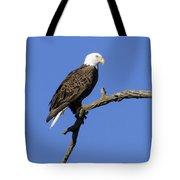 Bald Eagle 4 Tote Bag