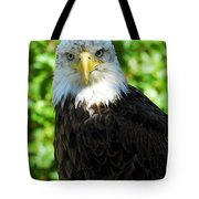 Bald Eagle - Alaska Tote Bag