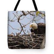 Bald Eagle And Eaglet Tote Bag