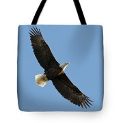 Bald Eagle At Bridger Mt Tote Bag