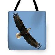Bald Eagle At Bridger Mt Tote Bag
