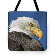Bald Eagle Closeup Tote Bag