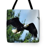 Bald Eagle Feeding 2 Tote Bag