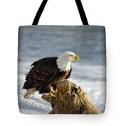 Bald Eagle Homer Spit Alaska Tote Bag