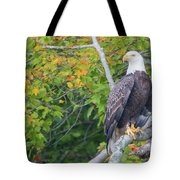 Bald Eagle In Fall Colors Animals Tote Bag