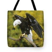 Bald Eagle In Perch Wildlife Rescue Tote Bag