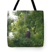 Bald Eagle In Sweetgum Tree Tote Bag