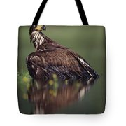 Bald Eagle Juvenile British Columbia Tote Bag
