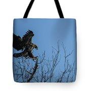 Bald Eagle Juvenile Landing In Tree Top Tote Bag
