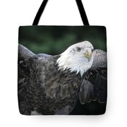 Bald Eagle Landing On Prey Tote Bag