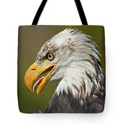Bald Eagle... Tote Bag