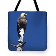 Bald Eagle On A Perch   #2698 Tote Bag
