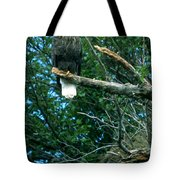 Bald Eagle Poses Tote Bag