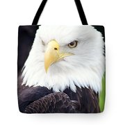 Bald Eagle - Power And Poise 04 Tote Bag