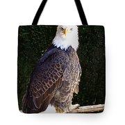 Bald Eagle Two Tote Bag