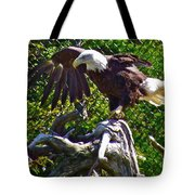 Bald Eagle With A Broken Wing In Salmonier Nature Park-nl Tote Bag