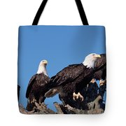 Bald Eagles Quartet Tote Bag
