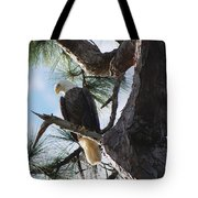 Bald Eagles Eye View Tote Bag