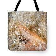 Baltic Isopod Tote Bag