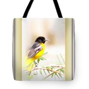 Baltimore Oriole 4348-11 - Bird Tote Bag
