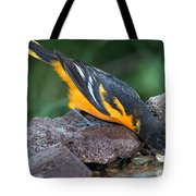Baltimore Oriole Drinking Tote Bag