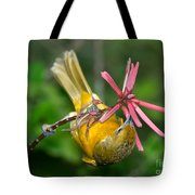 Baltimore Oriole Feeding On Coral Bean Tote Bag