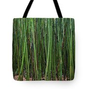 Bamboo Forest 3 Tote Bag